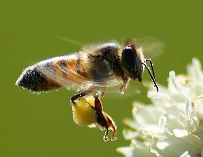 Insect conservation on farmland