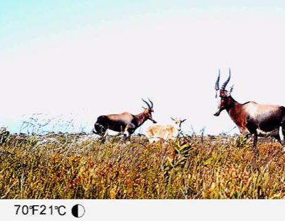Cape Peninsula Mammal Atlas Project